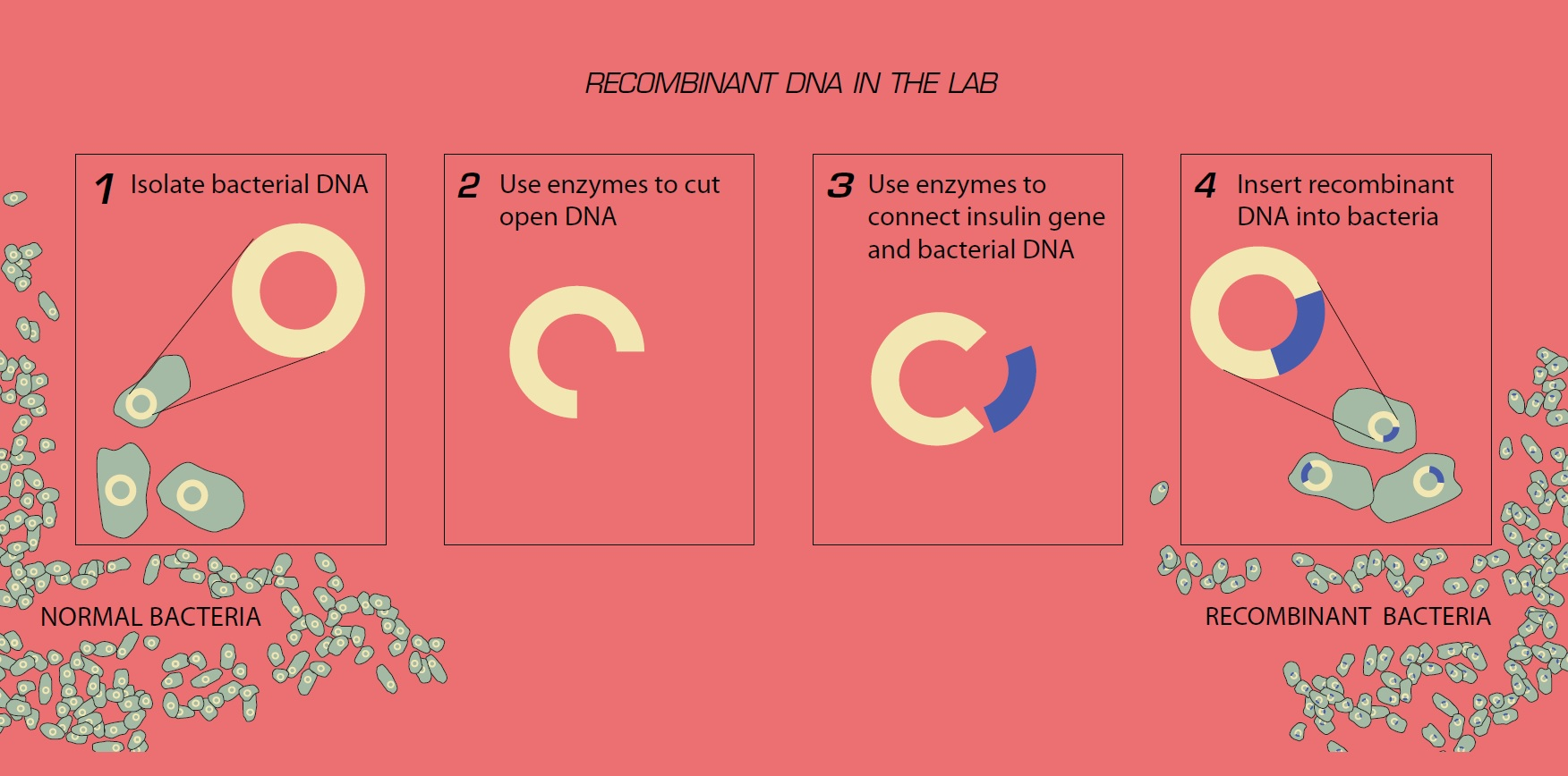 A diagram of the recombinant DNA process