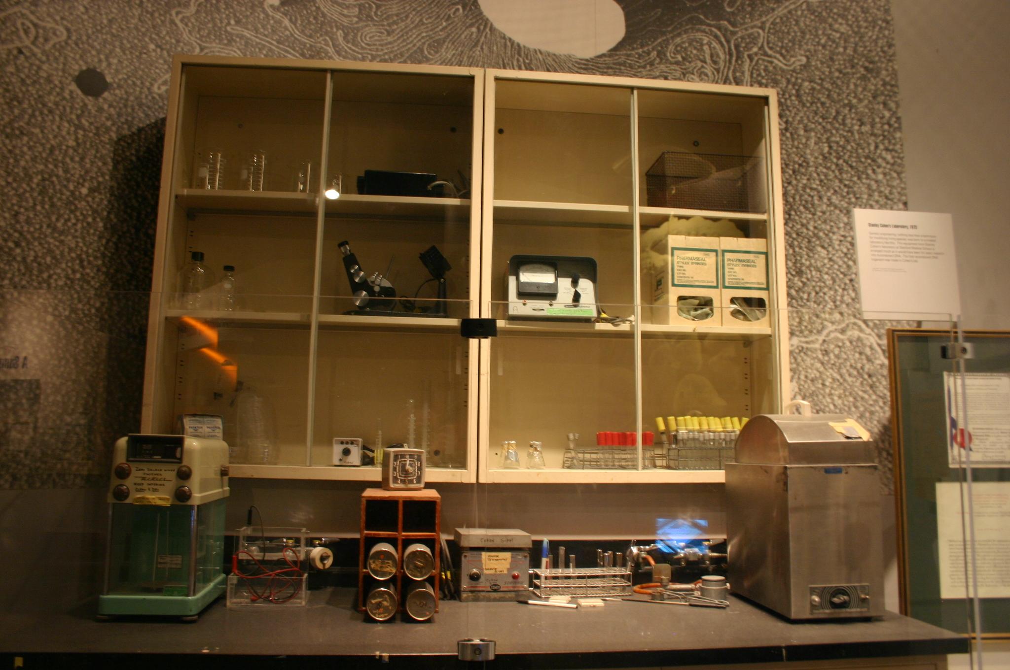 Stanley Cohen Lab