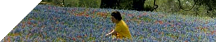 Lady Bird Johnson in a field of wildflowers in Eastern Texas
